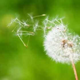 homeo-allergie
